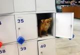 Жадность 80-го уровня: в Вологде воришка решил повторно ограбить супермаркет