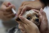 Вологжане смогут бесплатно сделать прививку против бешенства своим питомцам