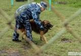 Полицейский пес раскрыл кражу велосипеда в Вологде