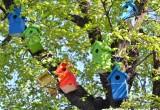 В Вологде растет «дерево гостеприимства»