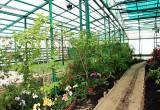 Вологжан приглашают на открытие Ботанического сада и шоу «Цветочная весна»