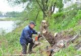 В Вологде начали очистку берегов реки от мусора и кустарников