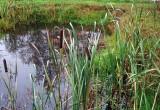 В Никольском районе утонула девятилетняя девочка