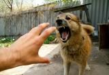 С начала года 2,5 тысячи жителей области пострадали от укусов животных