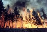 В этом году в Вологодской области произошло 55 лесных пожаров