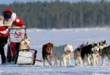Гонки на собачьих упряжках буду проводиться в Тотьме в середине января