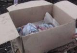 В Великом Устюге нашли тело новорожденного мальчика