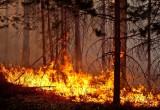 МЧС выясняет, каким населенным пунктам этим летом грозят лесные пожары