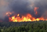 За разведение костров в лесах Вологодской области в 2016 г. выписано штрафов на 5,5 млн. руб.
