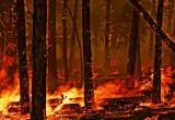 На Вологодчине потушили первый лесной пожар