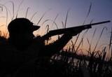 Сотрудники Росгвардии привлекли к ответственности охотника, стрелявшего гусей