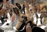 За 6 украденных кроликов вологжанину грозит 5 лет тюрьмы