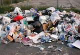 В Вологде нашли больше 100 стихийных свалок мусора