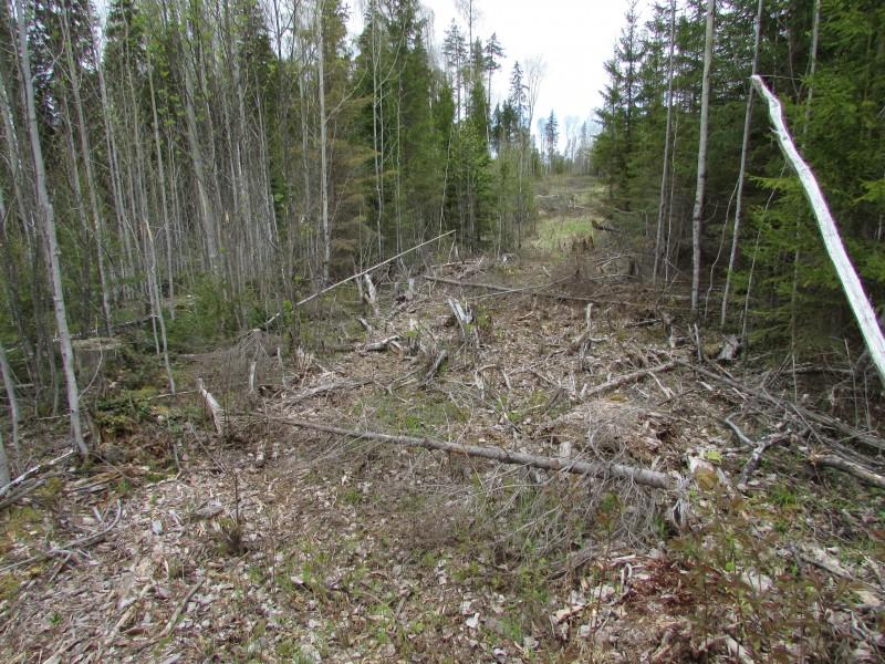 Гражданин Великоустюгском района уничтожил неменее 2-х сотен деревьев