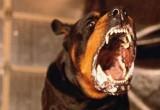 Случай бешенства у собаки произошел в Вологодской области, объявлен карантин