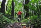 Под Череповцом неадекватный пенсионер убежал в лес и пропал
