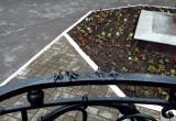 Спиленные голуби, пропавшая девушка в Вологде, отважные лисята на дороге и другие новости дня