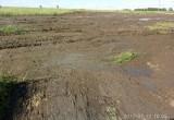 В Вологодском районе колхозники вывалили на дорогу тонны навоза (ФОТО, ВИДЕО)