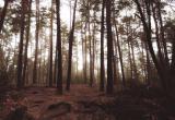 Череповчанин с 4-летней дочкой потерялись в лесах