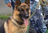 Растратчицу из ломбарда в Череповце вычислила служебная собака