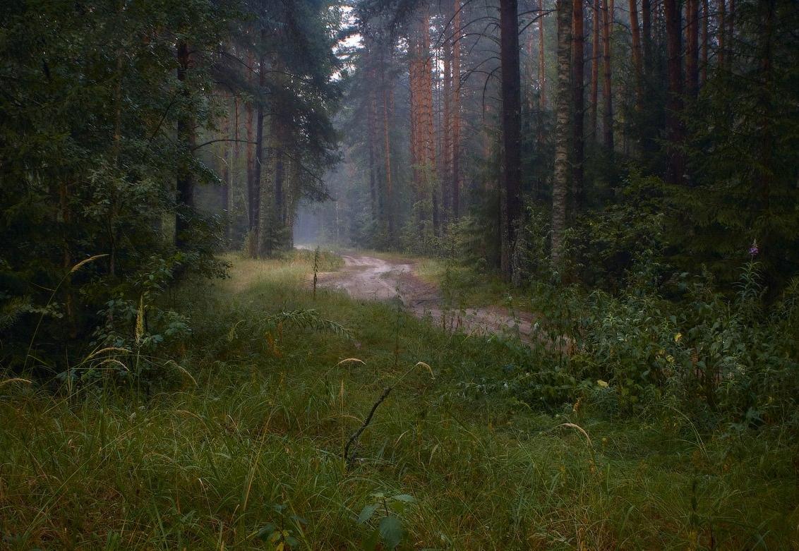 Два человека почти сутки кружили по болотам Вытегорского района
