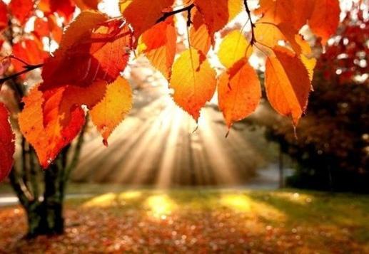 23 градуса тепла обещают синоптики на следующей неделе в Вологде