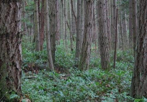 Участковый полиции спас мужчину-диабетика в лесу под Череповцом