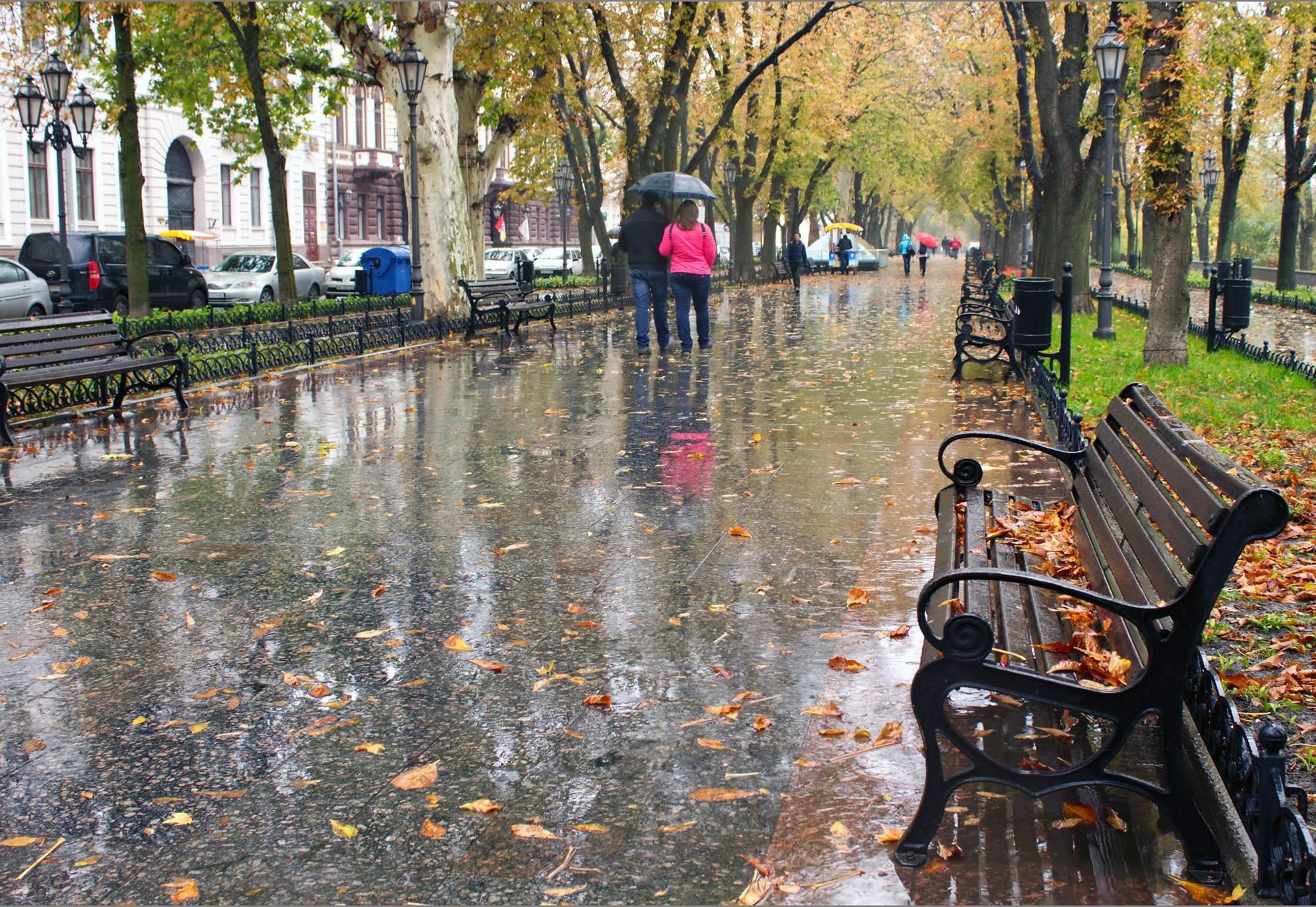 Дожди в Вологде не прекратятся до среды