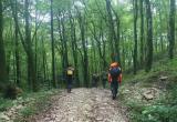 Только за минувшие сутки в лесах Вологодской области заблудилось шесть человек