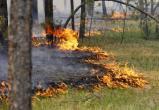 Дожди спасли Вологодскую область от пожаров