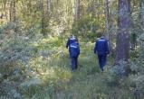 Пенсионерки, заговоренные лесом, найдены