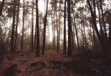 Пропавший в лесу житель Кадуйского района найден погибшим