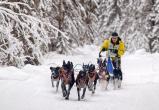 Гонки на собачьих упряжках пройдут в январе в Тотемском районе