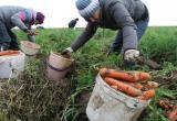 На вологжан, которые ринулись на поля с продуктами, обратила внимание полиция