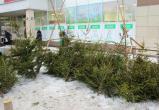 Продавца елок оштрафовали в Вологде за торговлю на территории парковки