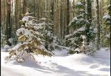 Заблудившегося жителя Верховажского района вывели из леса живым
