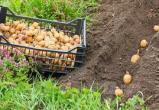 Депутаты выступили с инициативой внести изменения в законодательство, чтобы граждане могли использовать на личном огороде для посадки свой картофель и свои семена