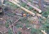 Черный лесоруб украл леса на полмиллиона рублей