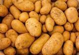 Вологжане могут выращивать картофель из своих семян, не опасаясь наказания