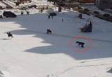 В Череповце лошадь сбросила наездницу и протащила несколько метров (ВИДЕО)