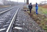 Вологжанин попал под поезд в Шекснинском районе