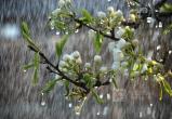 Погода порадует вологжан теплом и весенним дождиком
