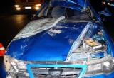 В Кирилловском районе Дэу врезалась в лося: пострадал один человек