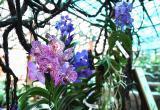 Тысяча видов одних орхидей: единственный в мире цветущий музей открылся в Вологде (ФОТО)