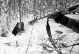За убийство медведицы с двумя медвежатами поплатится житель Белозерского района