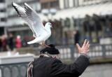 В Череповце чайки перепугали своим поведением людей