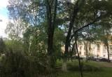 Сильный ветер повалил в Кировском сквере дерево, повреждены фонари