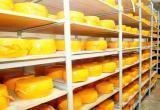 Пускать в производство или нет? Судьбу 10-го вида сыра решают на Вологодском молкомбинате