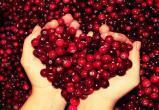 Андрей Петухов, учредитель «Вологодской ягоды» признан банкротом