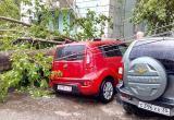 В Череповце порывистый ветер поломал и вырвал с корнем деревья (ФОТО)